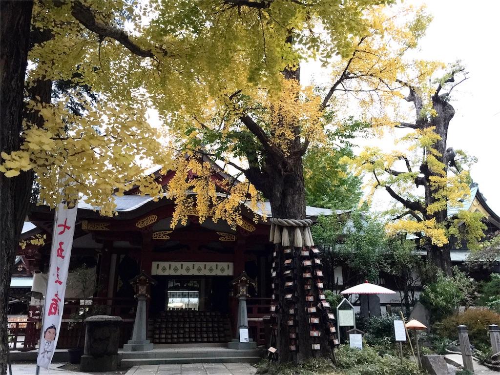 f:id:korokoro-nekochan:20161122171708j:image