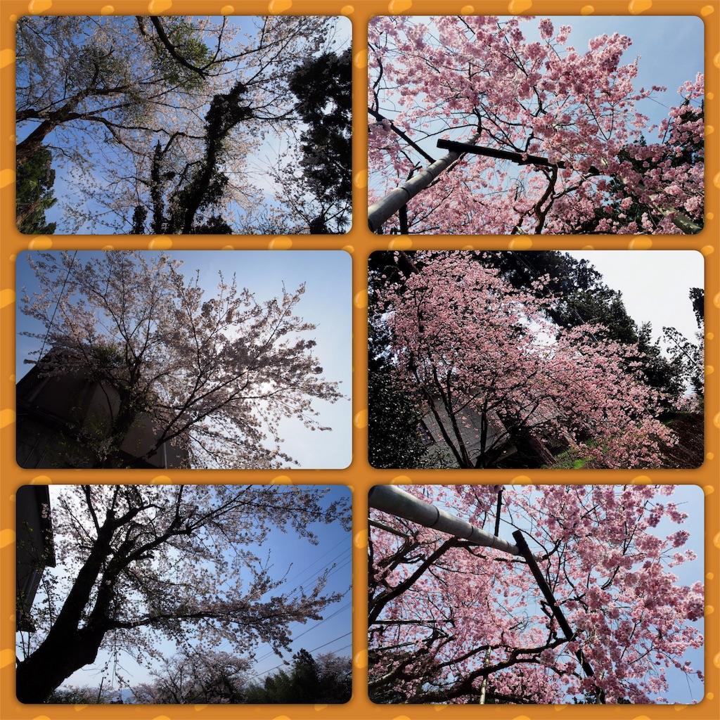 f:id:korokoro-nekochan:20170514001754j:image
