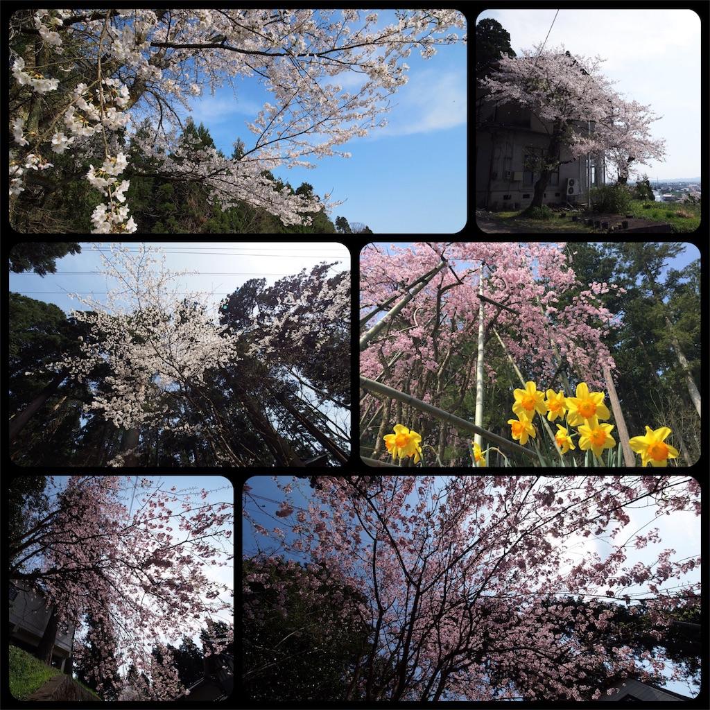 f:id:korokoro-nekochan:20170514001926j:image