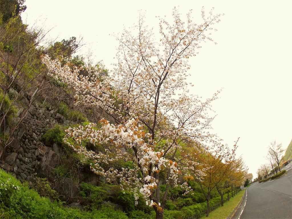 f:id:korokoro-nekochan:20170514173920j:image
