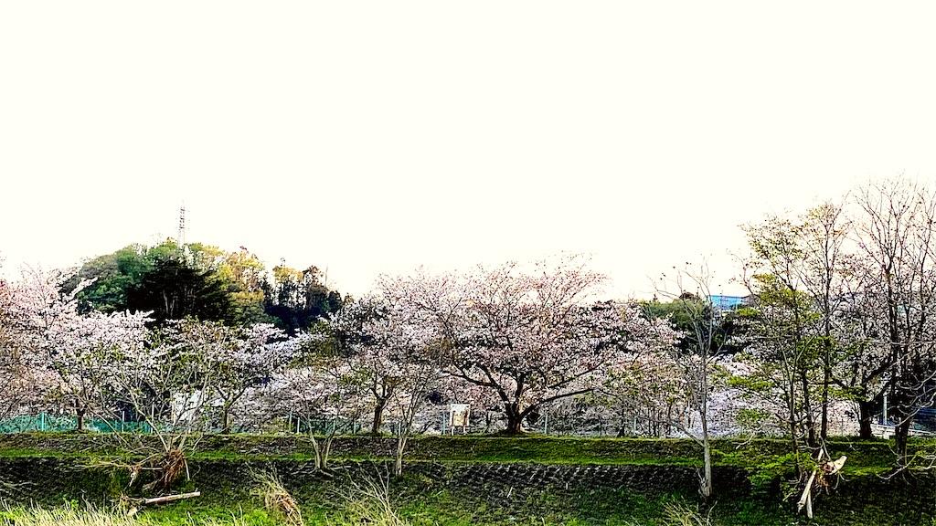f:id:korokoro-nekochan:20200406221428j:image
