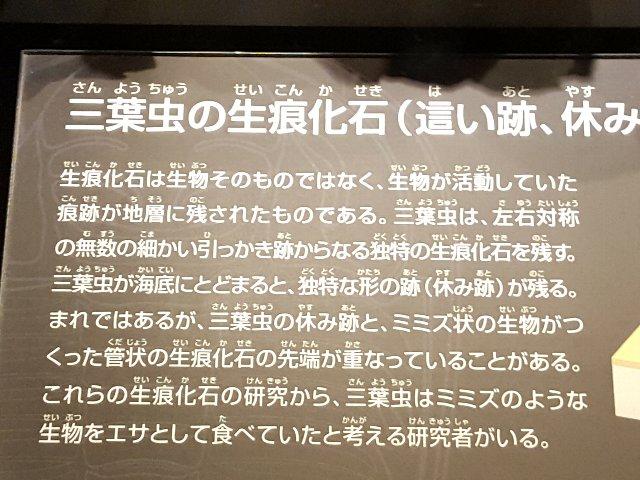 f:id:korokoroblog:20170614194901j:plain