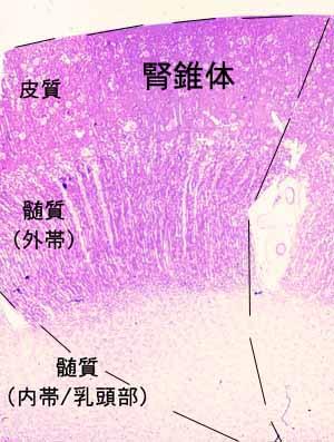 f:id:korokoroblog:20180401135817p:plain
