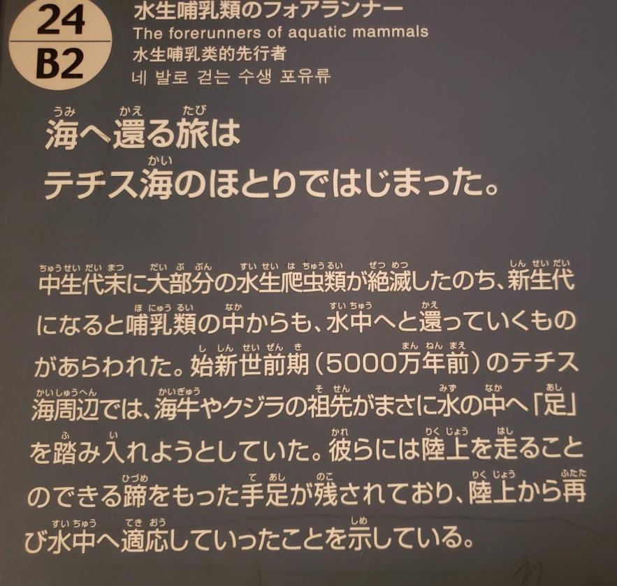 f:id:korokoroblog:20190727194642p:plain