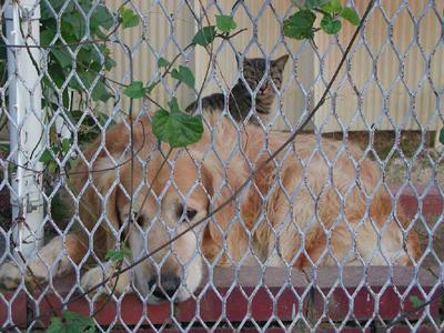 老犬と仔猫