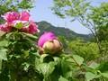 [花]ボタン