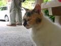 [猫]鼻黒