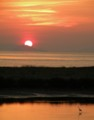 [夕日]夕日と鳥