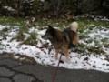[コロ]雪が好き