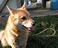 [犬]コロに似てる?