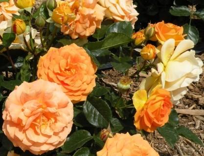 f:id:koromama:20090515140938j:image