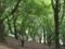 運動公園の森の中