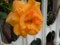 色変わりのツルバラが咲く