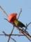 鳥・メジロ