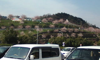 石鎚Pの桜