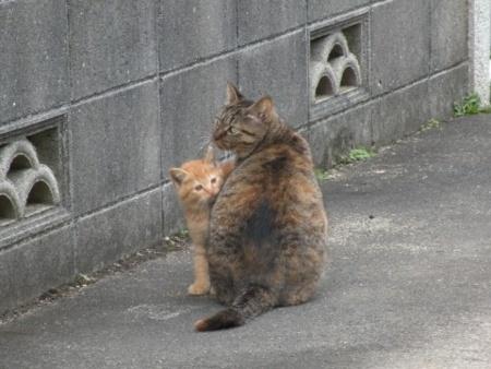 野良猫母仔