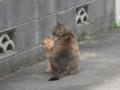 [猫]野良猫母仔
