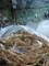 白猪の滝・置き縄