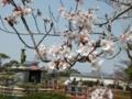 [桜]ゆうゆう祭り・弘法大師と桜