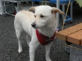 [犬]珈琲屋の看板犬のんちゃん