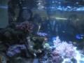 [魚]熱帯魚水槽