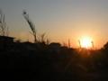 [夕日]精農橋たもと