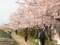 宮前川の散歩道
