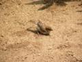 [鳥]餌をねだる子雀