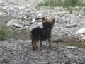 [うちの犬]水につけられたリン