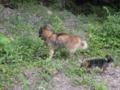 [うちの犬]コロとリン