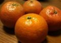 [果物]タンカン