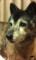 [うちの犬]
