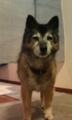 [うちの犬]コロ