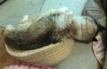 [うちの犬]寝相