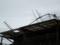 台風被害(ご近所)