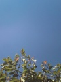 色づき始めた桜の葉