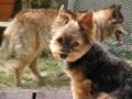 [うちの犬]リンとコロ