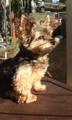 [うちの犬]日向ぼっこ