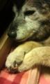 [うちの犬]コロ組手が可愛い!