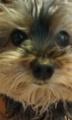 [うちの犬]毛がぼうぼうのリン