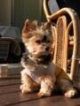 [うちの犬]日向ぼっこ中のリン