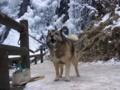 [うちの犬]冬の白猪の滝