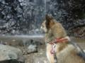 [うちの犬]夏の白猪の滝
