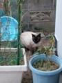 2月22日は猫の日だから猫画像を222枚貼るよ