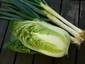 [野菜]収穫