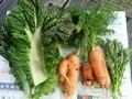 [野菜]家庭菜園