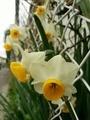 [植物]花写真