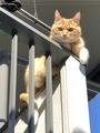[猫]2月22日は猫の日だから猫画像222枚貼るよ