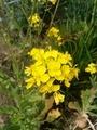 [植物]の花