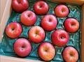 [果物]信州リンゴ